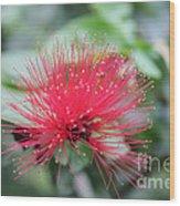 Fluffy Pink Flower Wood Print