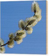 Fluffy Spring - 3 - Featured 3 Wood Print