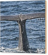 Flukes Of A Sperm Whale 2 Wood Print by Heiko Koehrer-Wagner