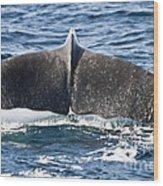 Flukes Of A Sperm Whale Wood Print