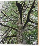 Fluorescent Moss Wood Print