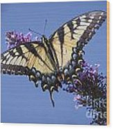 Fluted Swallowtail Wood Print