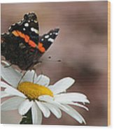 Flutter II Wood Print