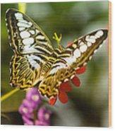 Fluttering Wood Print