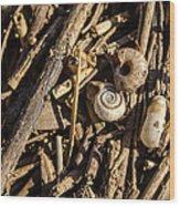 Fluvial Microlife Wood Print
