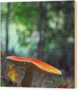 Fly Agaric Wood Print