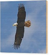 Fly Eagles Fly Wood Print