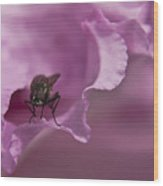 Fly On A Rhododendron Wood Print