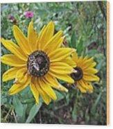 Fly On Rudbeckia Wood Print