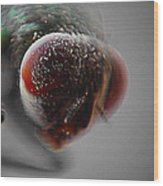 Fly On The Wall Digital Art Wood Print