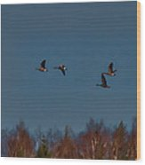 Flyers -leif Sohlman Wood Print