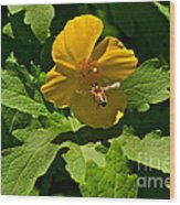 Flying Bee And Wood Poppy Wood Print