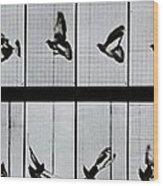 Flying Bird Wood Print by Eadweard Muybridge