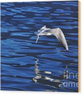 Flying Bird Wood Print