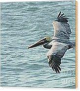 Flying Brown Pelican  Wood Print