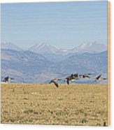 Flying Canadian Geese Rocky Mountains 2 Wood Print