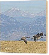 Flying Canadian Geese Rocky Mountains Panorama 2 Wood Print