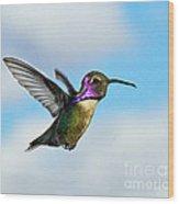 Flying Costa's Wood Print