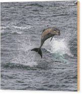 Flying Dolphin Wood Print by David Yack