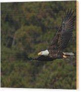 Flying Eagle Wood Print