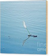 Flying Feather Boat Wood Print