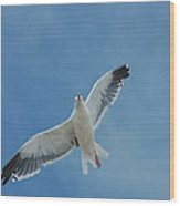 Flying Feathered Friend Wood Print