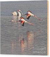 Flying Flamingos Wood Print