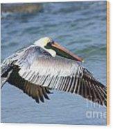 Flying Florida Pelican Wood Print