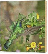 Flying Green Violetear Wood Print