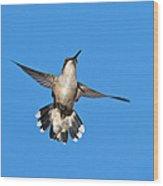 Flying Hummingbird Against Blue Sky Wood Print