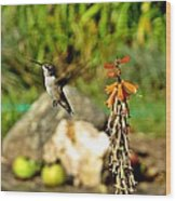 Flying Hummingbird Wood Print