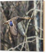 Flying Mallard Wood Print