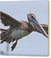 Flying Pelican Panorama Wood Print