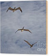 Flying Pelicans Wood Print