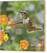Flying Scintillant Hummingbird Wood Print