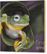 Flying Tree Frog Wood Print by Linda D Lester