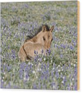 Foal In The Lupine Wood Print by Carol Walker