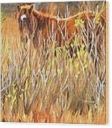 Foal In The Sticks Wood Print