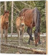Foal Spot Wood Print