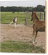 Foals At Play Wood Print by Dana Moyer