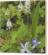 Foamflower And Crested Dwarf Iris - D008428 Wood Print