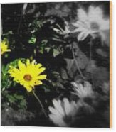 Focus On 2 Yellow Daisies Wood Print