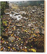 Fog And Fall Color Williams River Wood Print