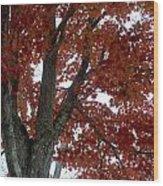 Fog-filled Fall Wood Print