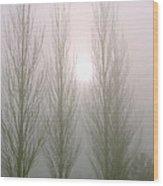 Fog Poplars 2 Wood Print