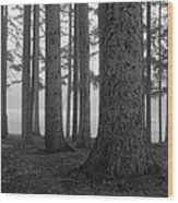 Fog Within The Pines  Bw Wood Print