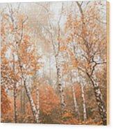 Foggy Autumn Aspens Wood Print