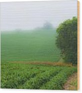 Foggy Bean Field Wood Print