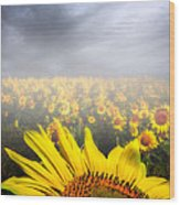 Foggy Field Of Sunflowers Wood Print