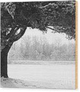 Foggy Icestorm Wood Print